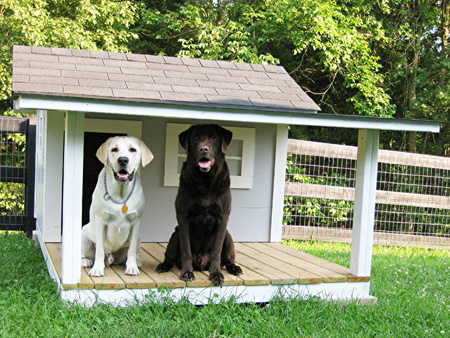 Custom Dog Kennel for Two Labs